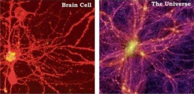 脳細胞と宇宙