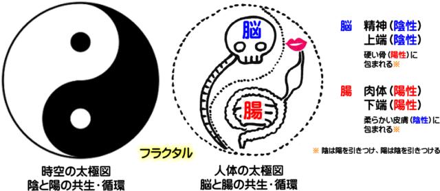 人体の太極図