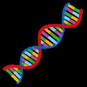 遺伝子DNA
