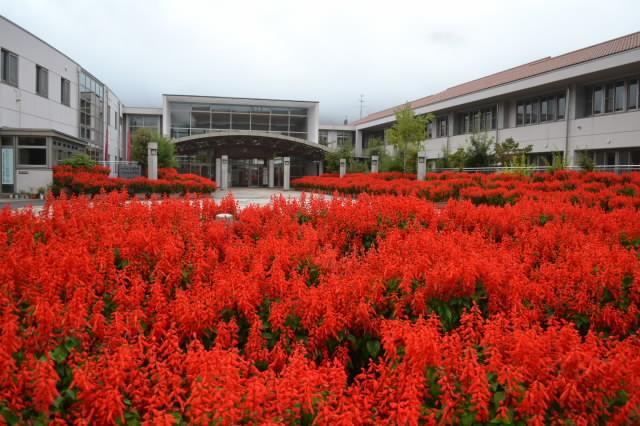 サルビア花壇
