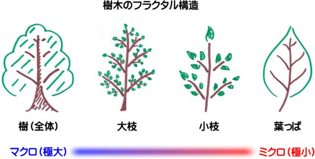 樹木のフラクタル構造