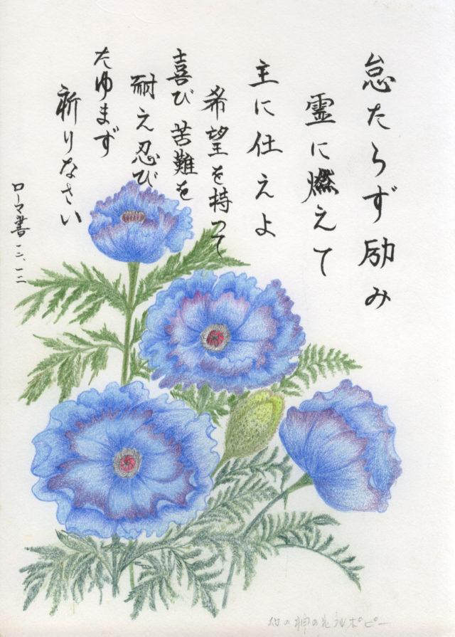 幻の神の花ブルーポピー 小野春子