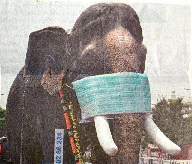 マスクをしたインド象