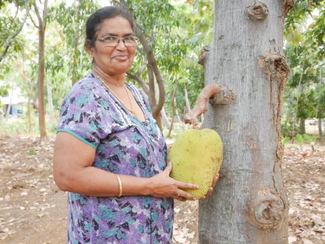 南インドのジャックフルーツ