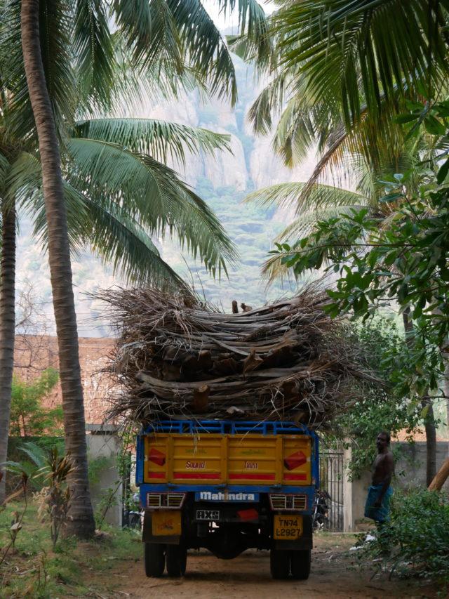 椰子の葉を運ぶ