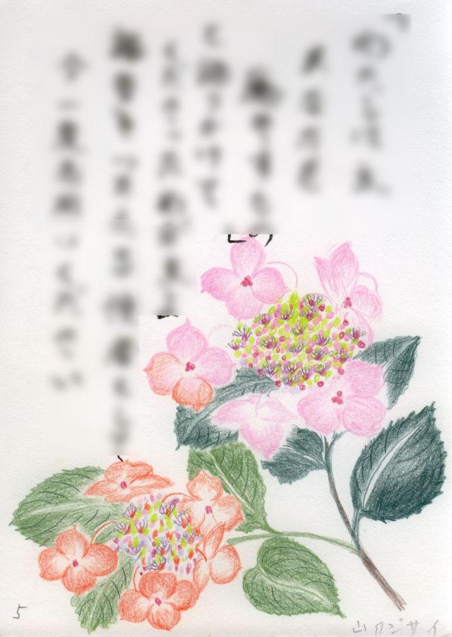 小野春子さんが盲目で描いた山アジサイ